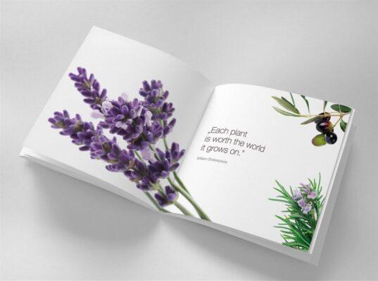 طراحی کاتالوگ و بروشور